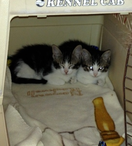 Kittens came home on Valentine's Day 2014.