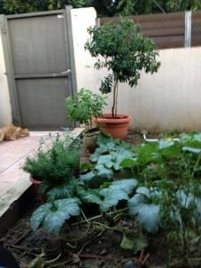 Garden Israel